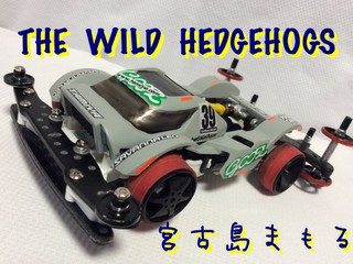 【No Wild Fes】サバトラ‼️