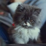 猫好きなミニ四駆レーサーのお茶の間