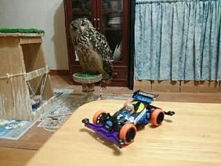フクロウ S2
