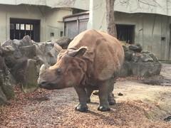 今日は動物園