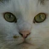 tigerlatte0915