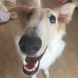 シリウス(福っちの犬)