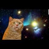 ネコの彗星