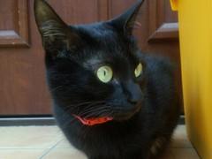 猫ブラックスペシャル